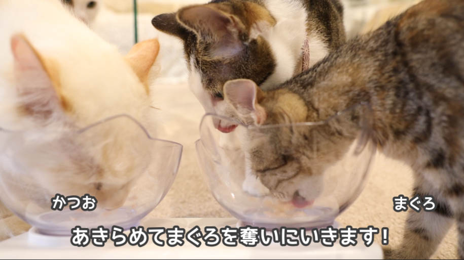 チャオちゅーるのまぐろを食べる猫たち
