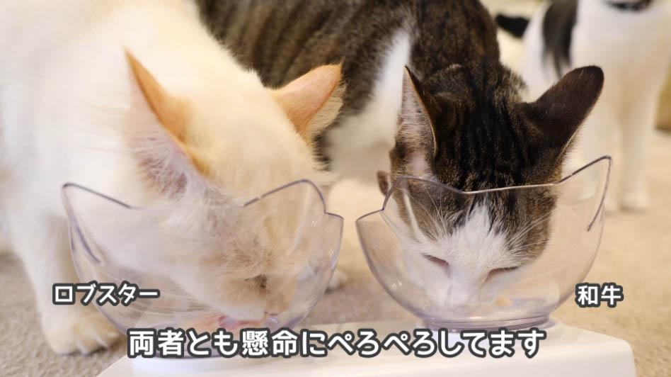 チャオちゅーるを懸命に舐める猫たち