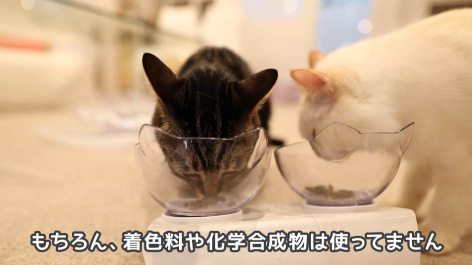 ニュートロ ナチュラルチョイス アダルトターキーをちょこちょこ食べる猫たち