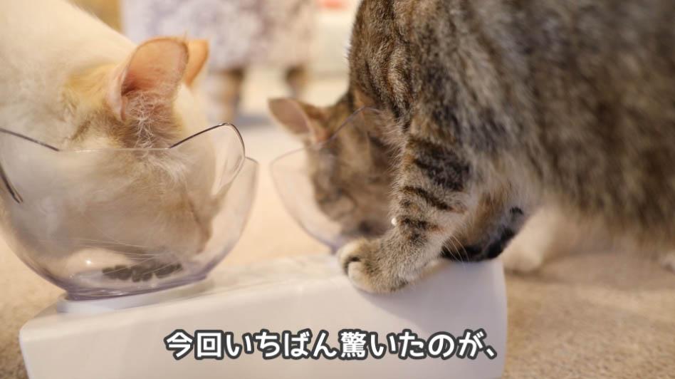 ひたすらにモグニャン・キャットフードを食べる猫たち