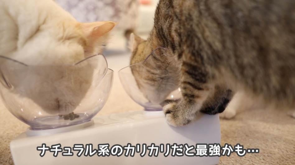 モグニャン・キャットフードの匂いをかぎながら食べる猫たち