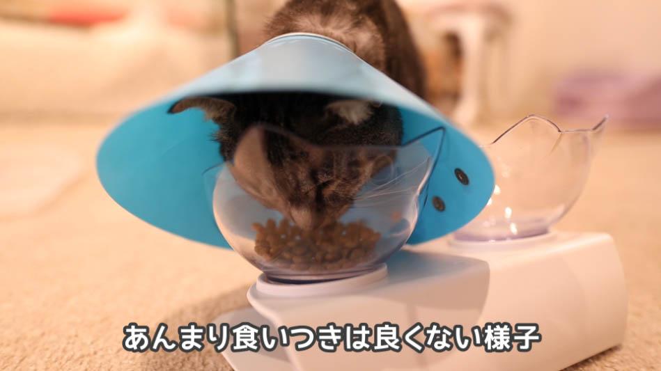 ロイヤルカナン ケアはあんまり猫から評判が良くない