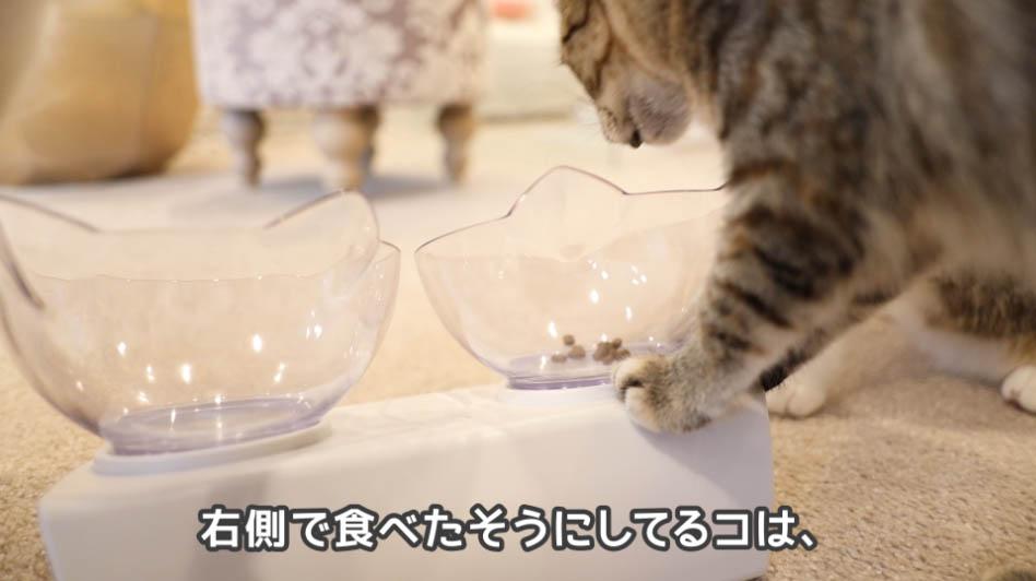 モグニャン・キャットフードを食べたそうにしてる猫