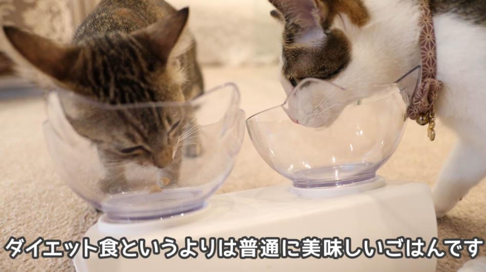 サイエンス・ダイエットは猫たちに好評だった
