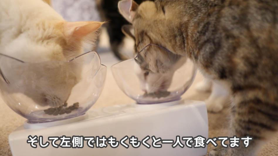 猫がキャットフードを食べている