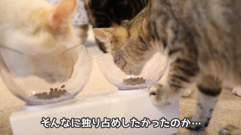 モグニャン・キャットフードを独り占めしたい子ネコ