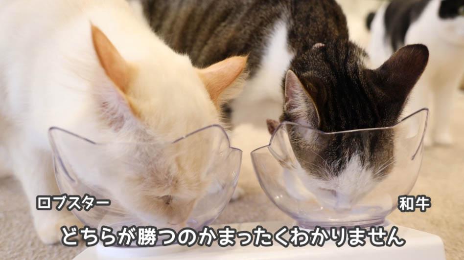 チャオちゅーるをひたすら舐める猫たち