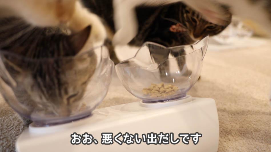 サイエンス・ダイエットを食べる猫たち