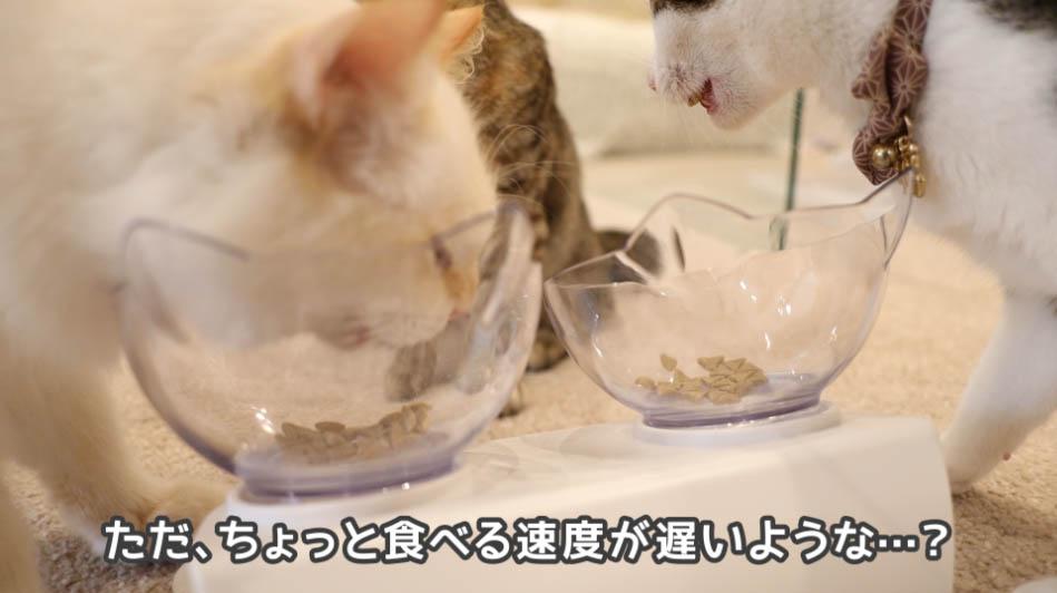 サイエンス・ダイエットにちょっと飽きてきた猫たち