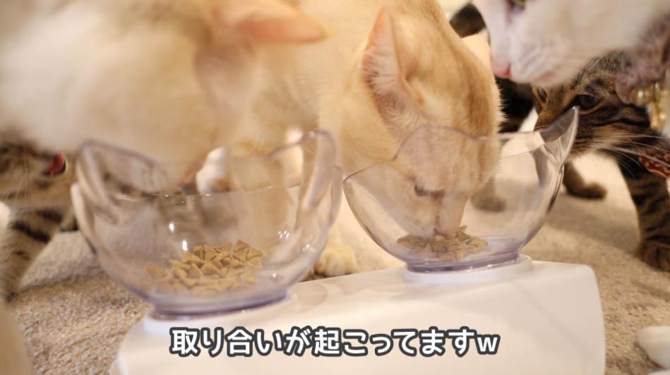 サイエンス・ダイエットを取り合う猫たち