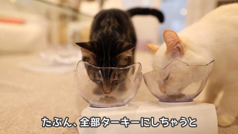 ニュートロ ナチュラルチョイス アダルトターキーを食べる猫たち