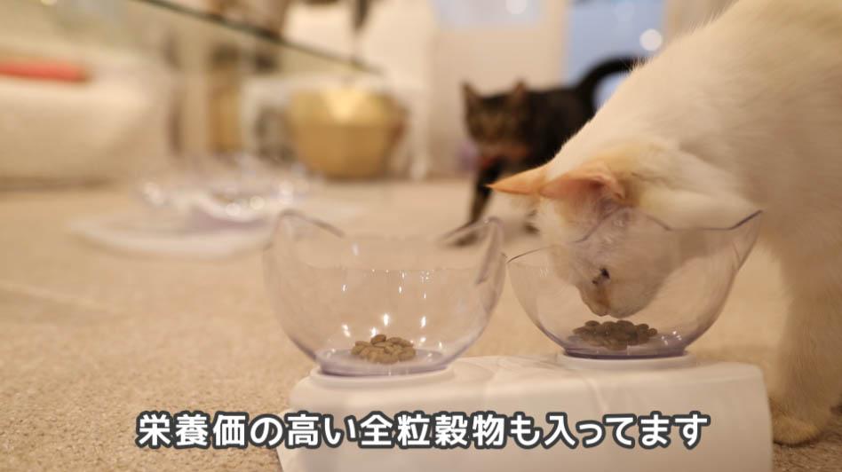 ニュートロ ナチュラルチョイス アダルトターキーの匂いを嗅ぐ猫