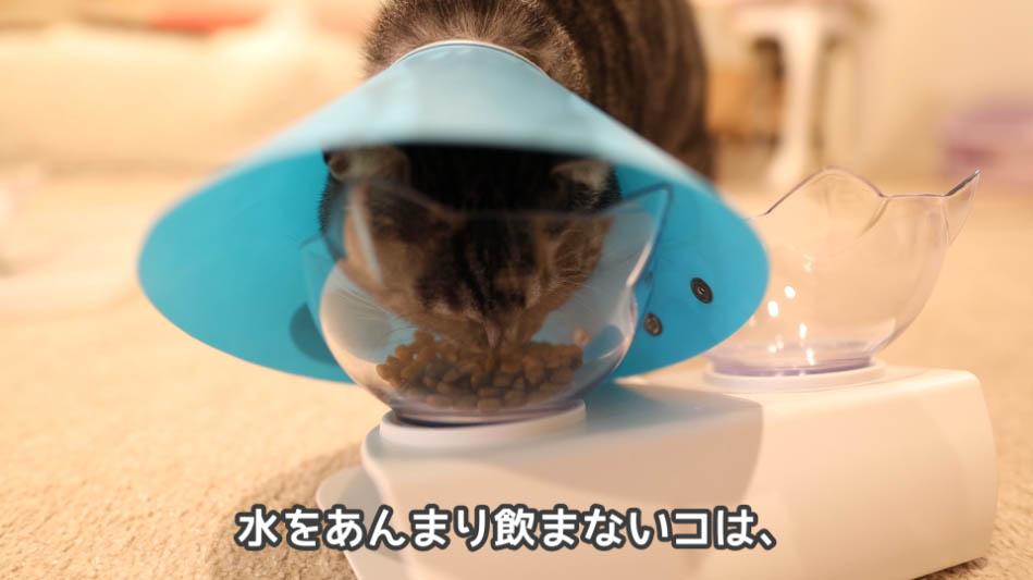 水をあんまり飲まない猫は結石になりやすいという説明