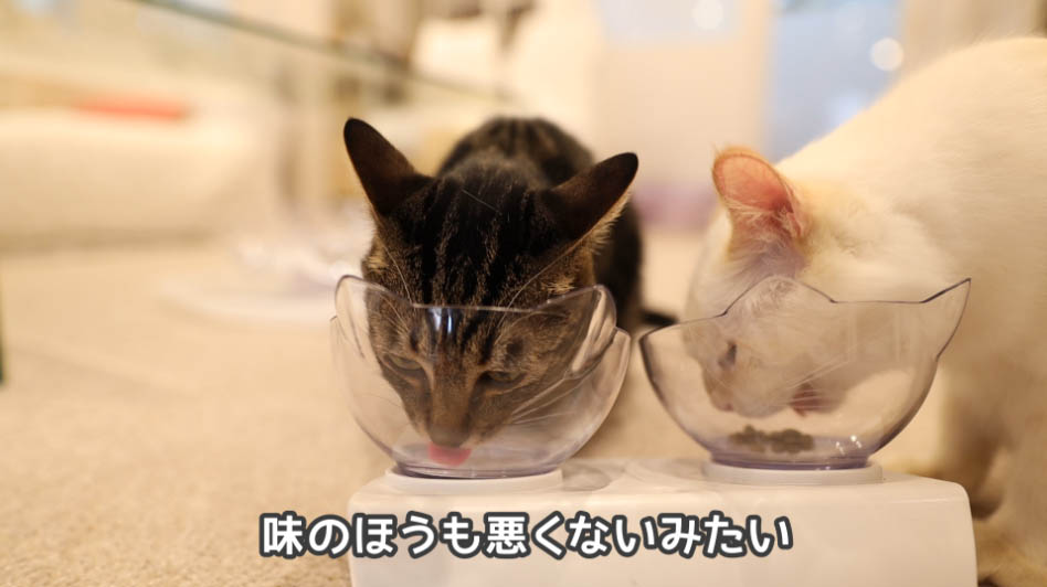 ニュートロ ナチュラルチョイス アダルトターキーの味は猫に好評だった