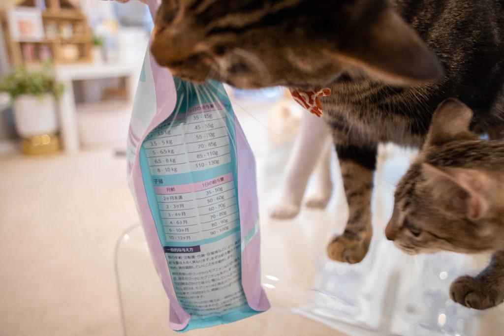 モグニャン・キャットフードの袋に噛み付く猫