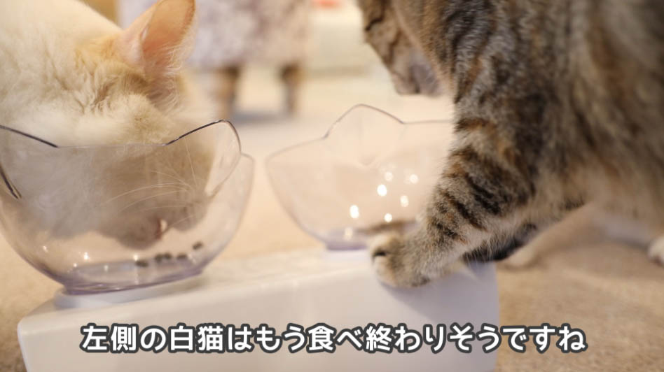 モグニャン・キャットフードを食べ終わりそうな左側の猫