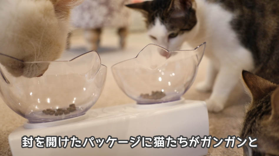 モグニャン・キャットフードを食べ終わりそうな猫たち