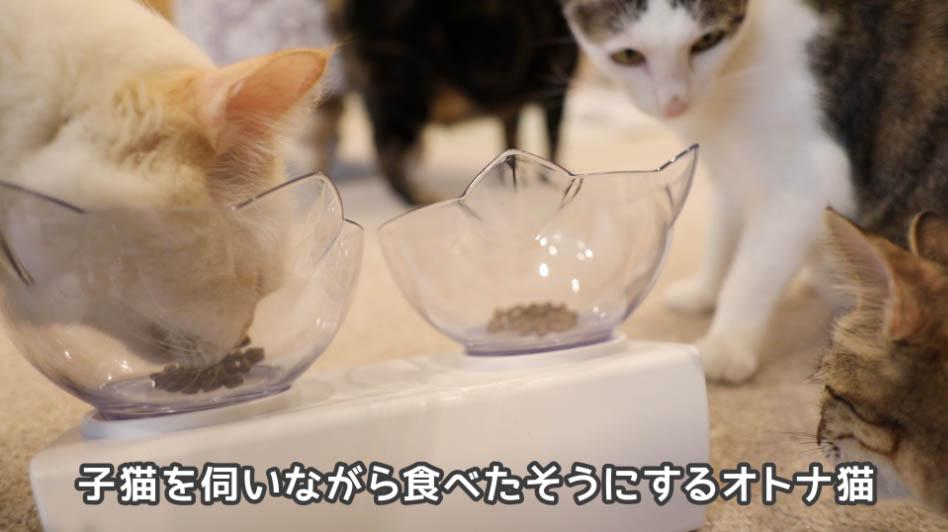 モグニャン・キャットフードを食べたいけど食べれてない猫