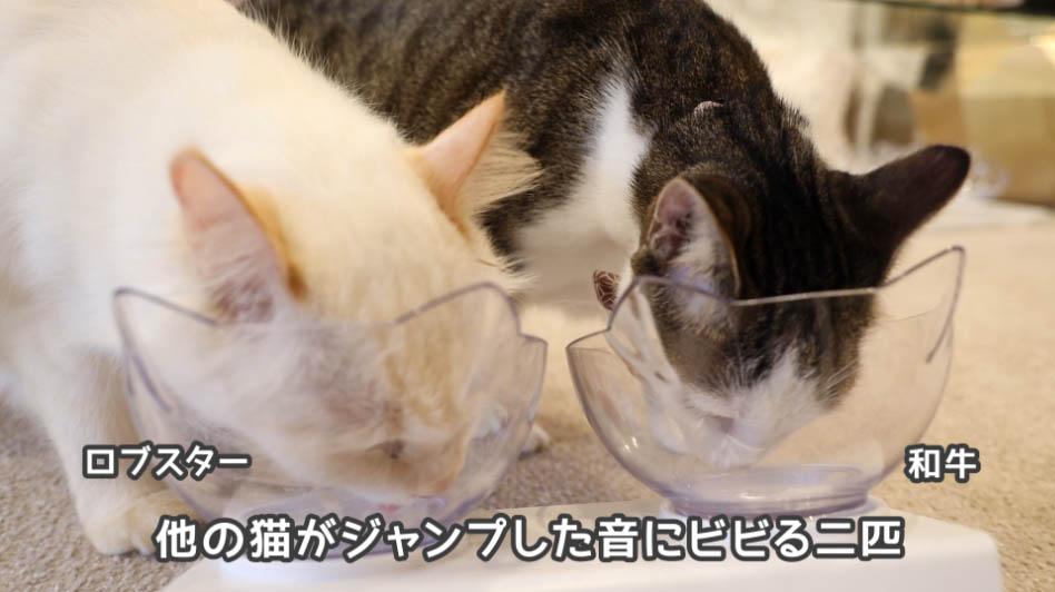 チャオちゅーるをさらに舐める猫たち