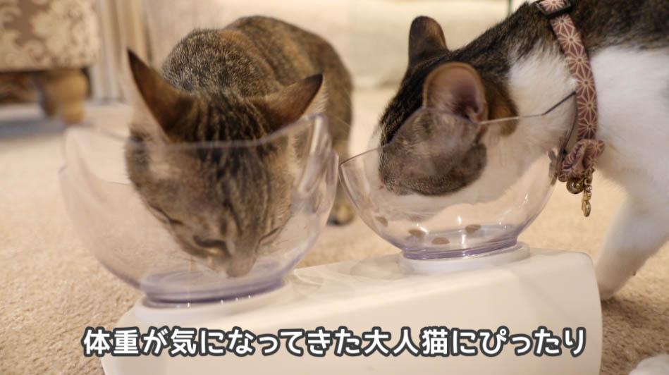 サイエンス・ダイエットは体重が重い猫にいい