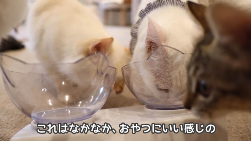 銀のスプーン三ツ星グルメ お魚味クリームはおやつに良さそう