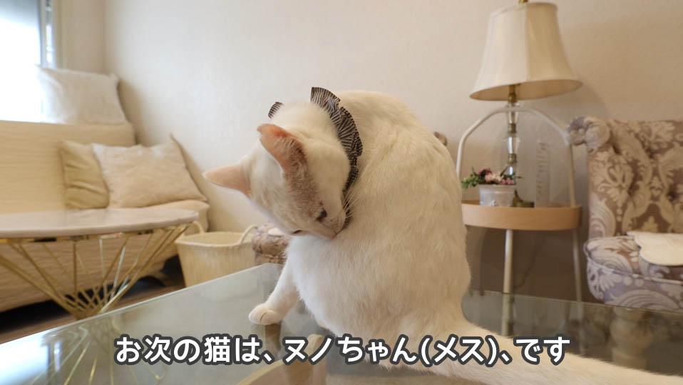 猫のヌノちゃん