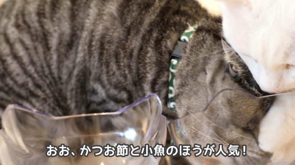 猫はかつお節と小魚味が好評