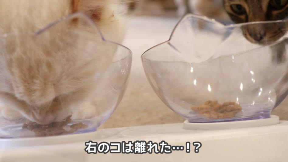 COMBOプレゼント歯の健康と口臭ケアを食べない右の猫