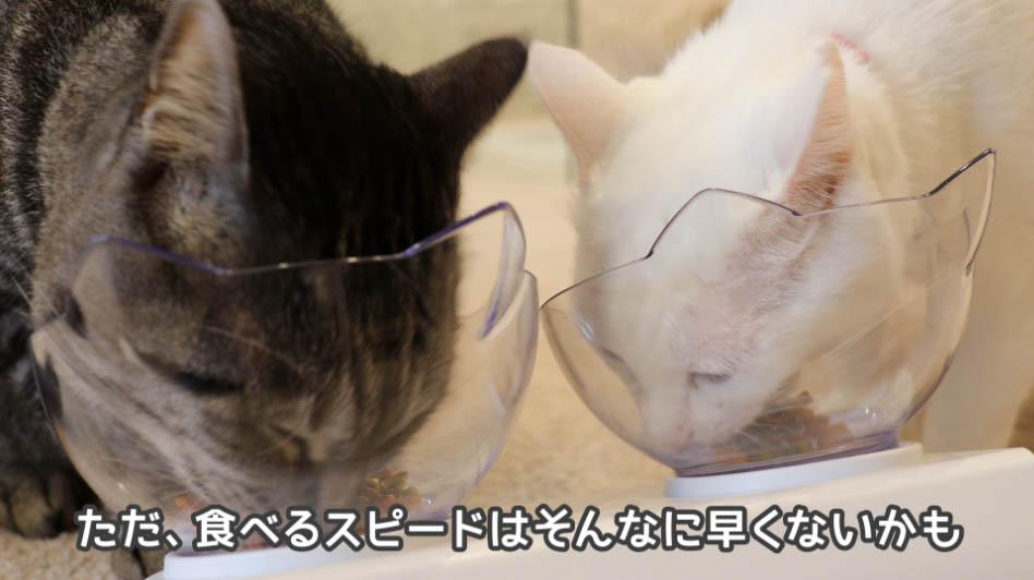 猫たちの食べるスピードは遅い