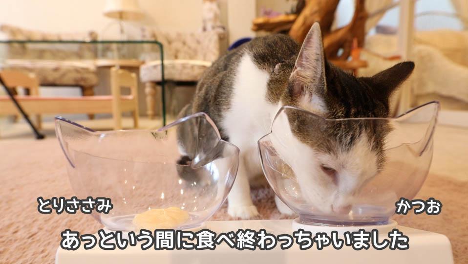 チャオちゅーるのかつおを完食する猫