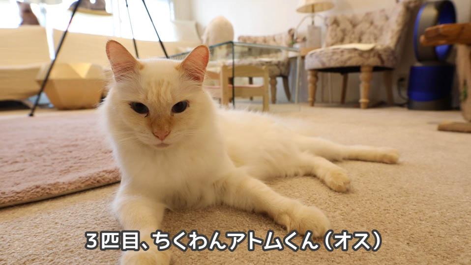 猫のちくわんアトムくん
