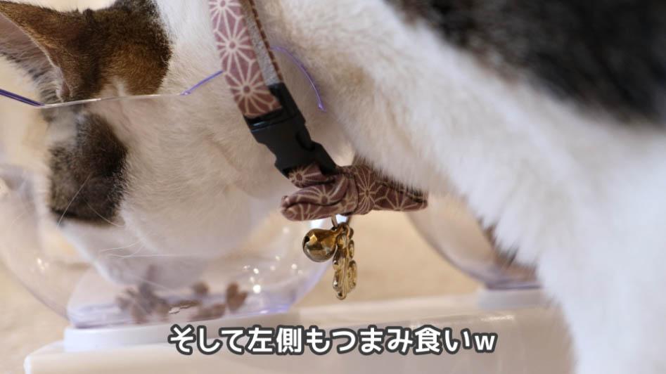 COMBOプレゼント歯の健康と口臭ケアをつまみ食いする猫