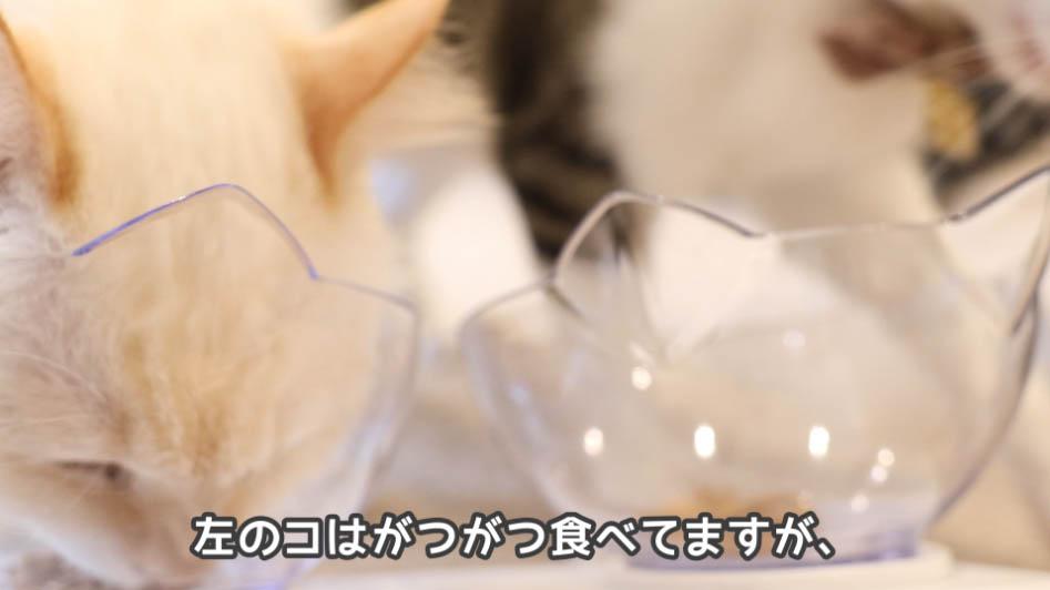 COMBOプレゼント歯の健康と口臭ケアを食べる猫