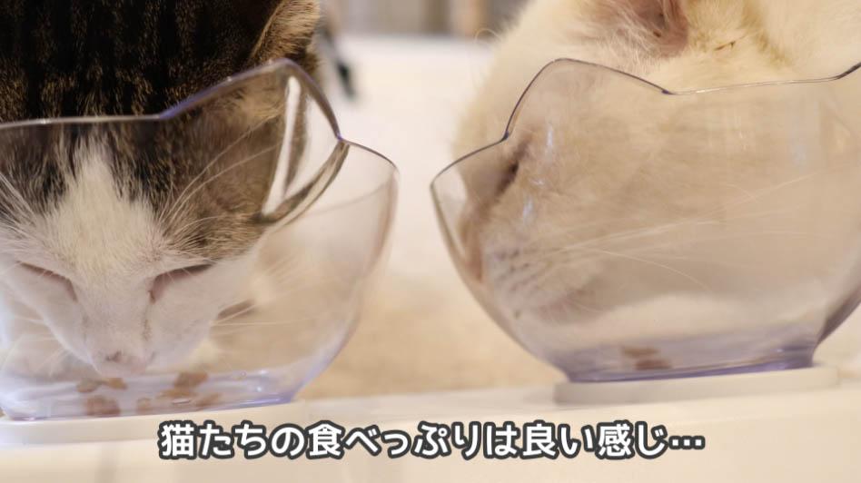 COMBOプレゼント下部尿路の健康維持は猫たちに好評