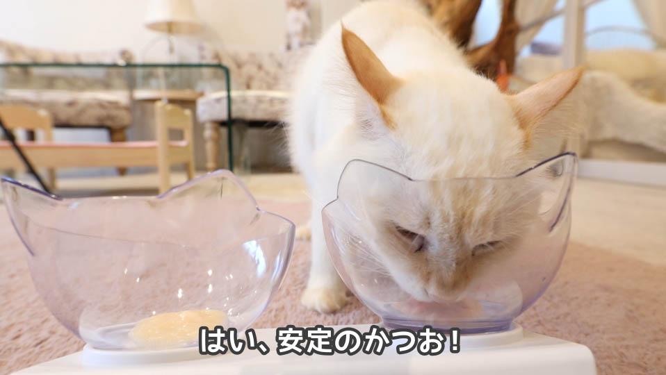 チャオちゅーるのささみとかつお、かつおを選ぶ猫
