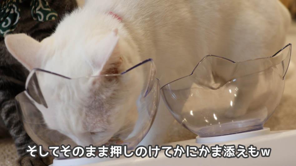 懐石2dishのかにかま添えも食べる猫