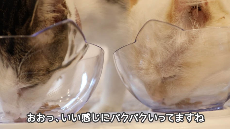COMBOプレゼント下部尿路の健康維持を食べる猫たち