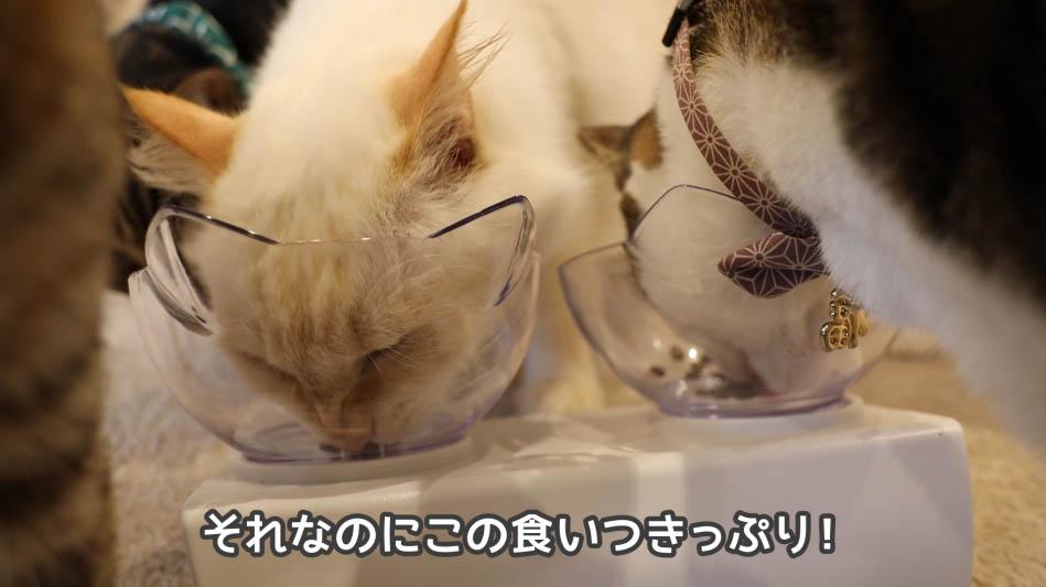 猫たちの食いつきが良いキャットフード