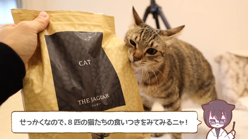 ジャガー・キャットフードが気になる猫
