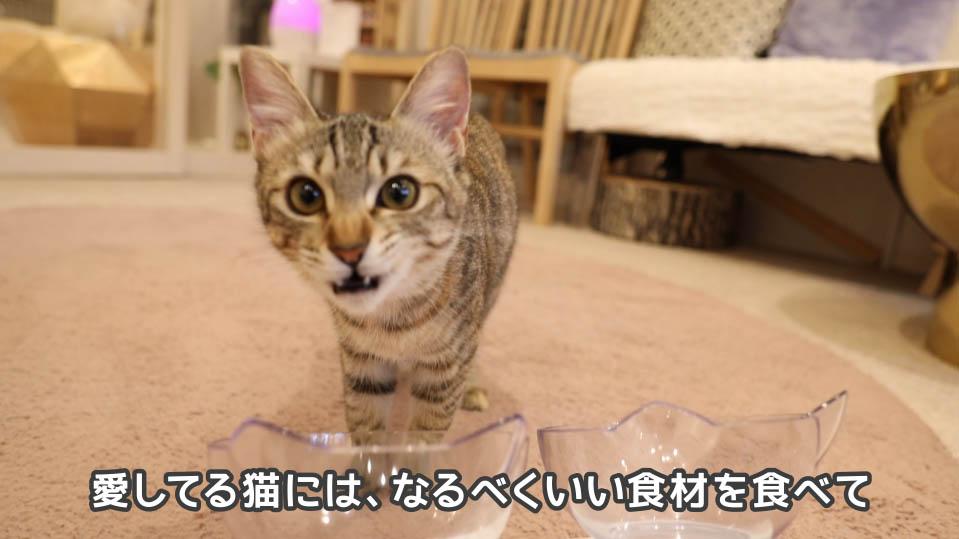 ジャガー・キャットフードは愛してる猫におすすめ
