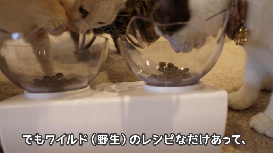 ニュートロ・ワイルドレシピ・キャットフードを猫が食べてるところ