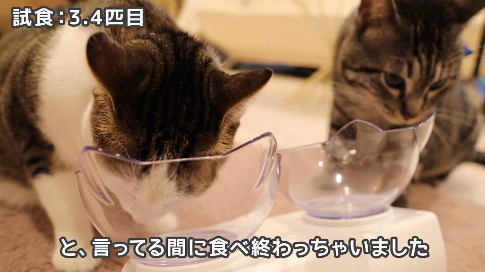 ジャガー・キャットフードを完食した3.4匹目の猫たち