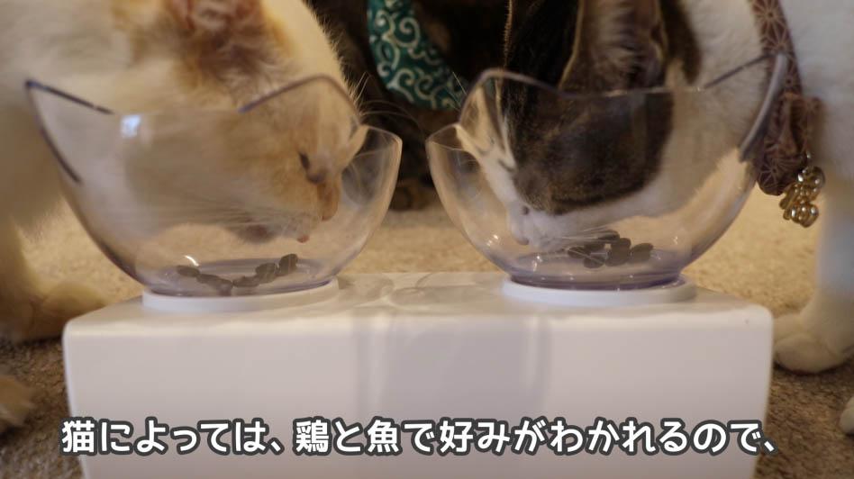 猫の好みは鶏と魚で分かれる