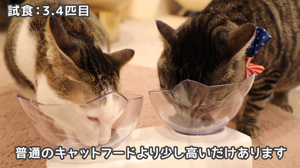 ジャガー・キャットフードをいい感じに食べる猫たち