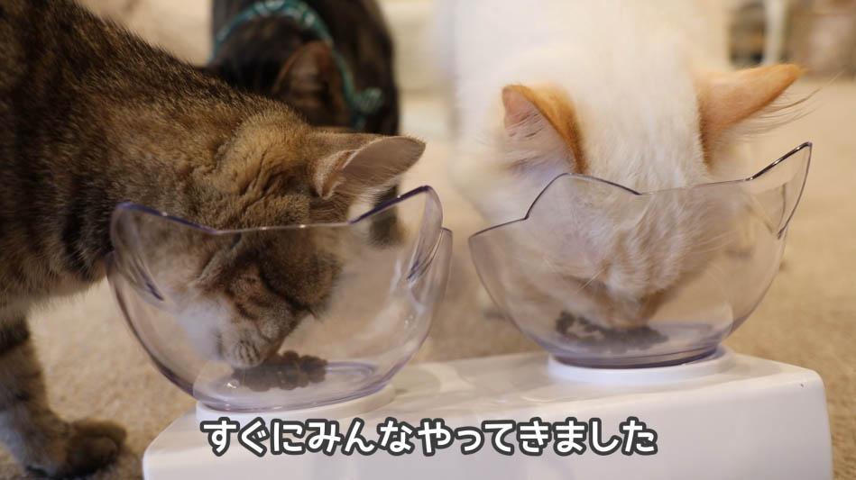 グランツ・キャットフードをガツガツ食べる猫たち