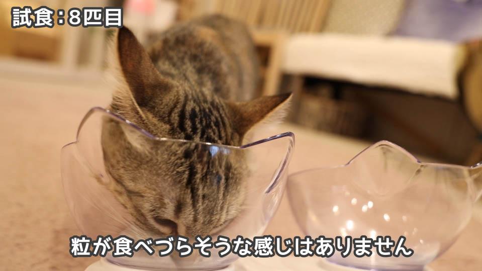ジャガー・キャットフードは子ネコでも食べやすい