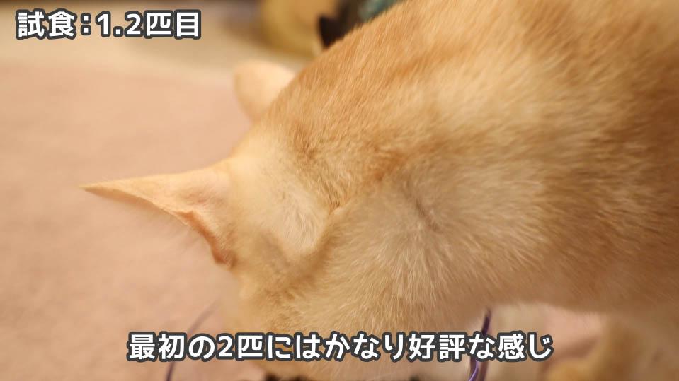ジャガー・キャットフードを食べる1.2匹目の猫たち
