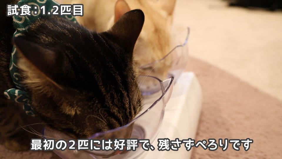 ジャガー・キャットフードを完食した1.2匹目の猫たち