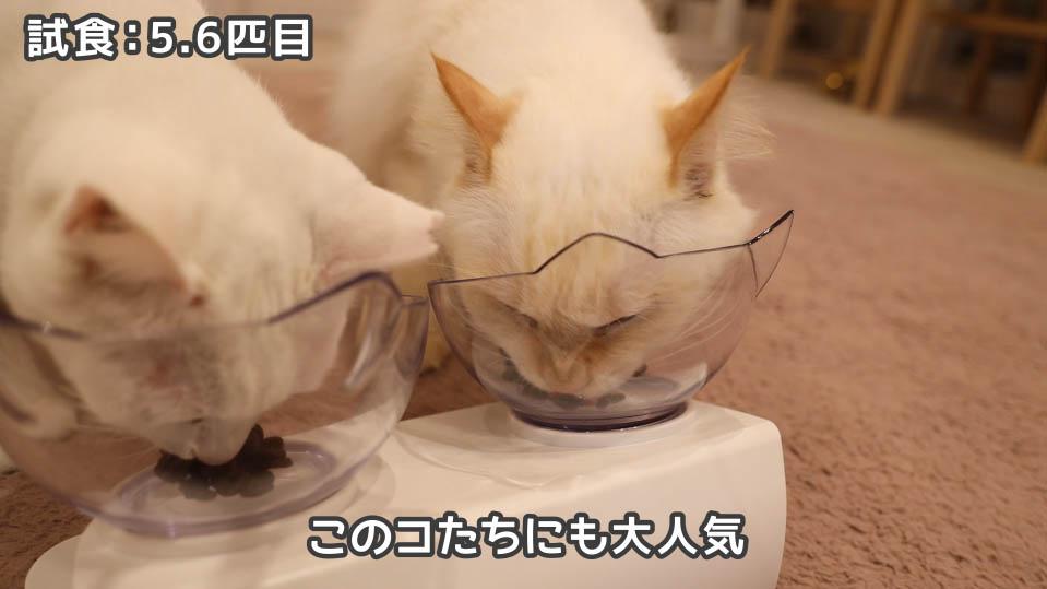 ジャガー・キャットフードを食べる5.6匹目の猫たち
