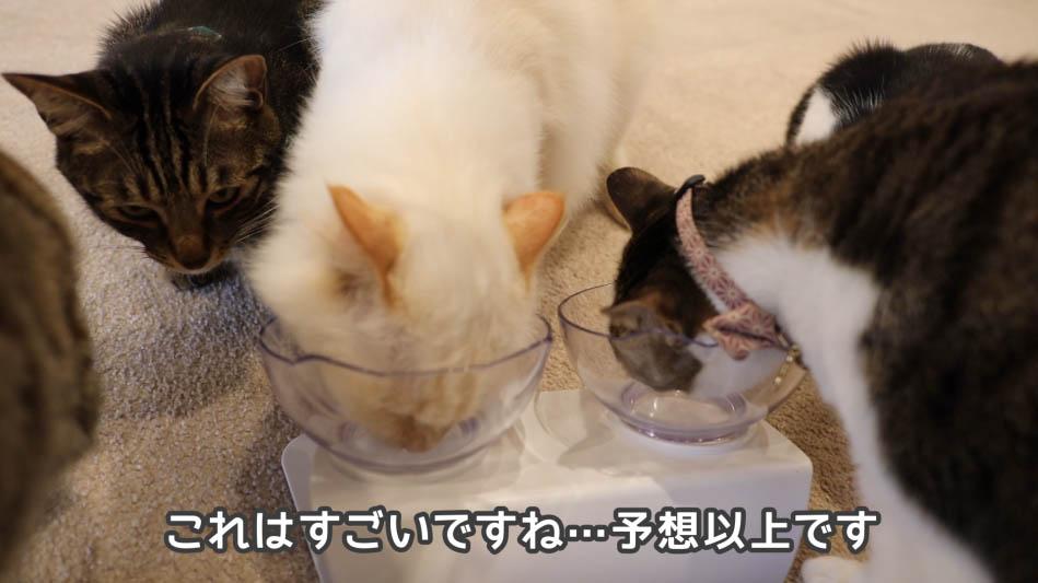予想以上に食べる猫たち